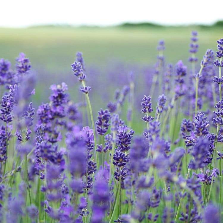 Cold Spring Farm - Herbs