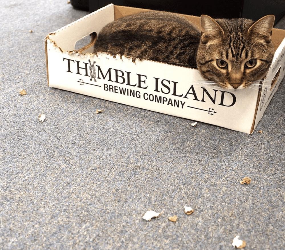 Meet Hero - Thimble Island Brewing & Operations Member
