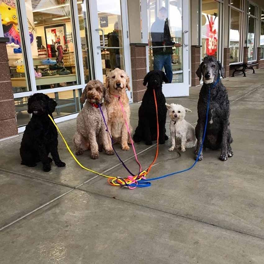 Westbrook Outlets Dogs