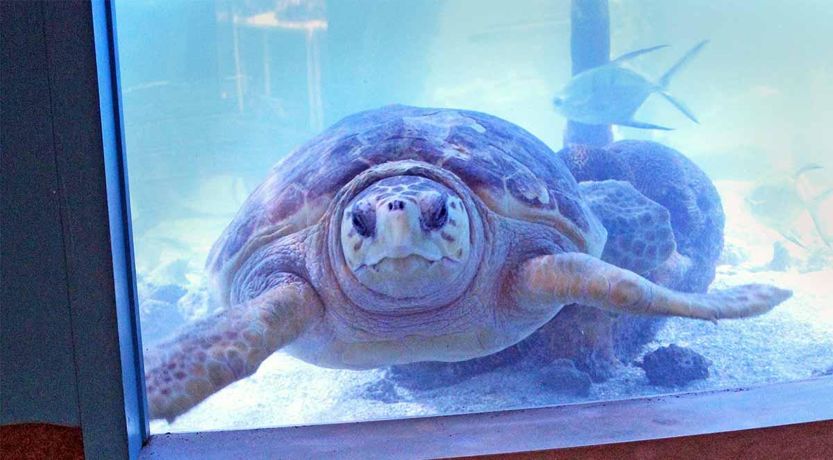 The Maritime Aquarium at Norwalk reopening June 20th